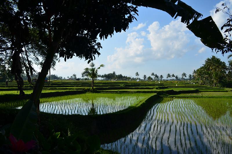 ubud-bali-eguidetravel-flickr.jpg