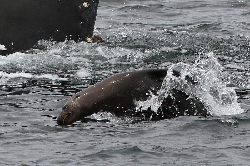 humpback and sea lion IMG_1787 (3).jpg