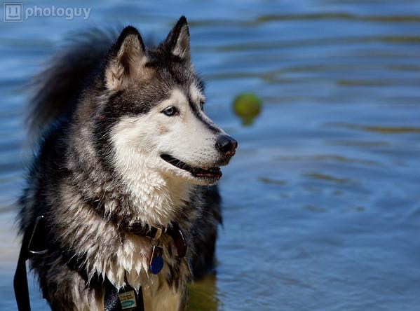 0011-Dog's Life