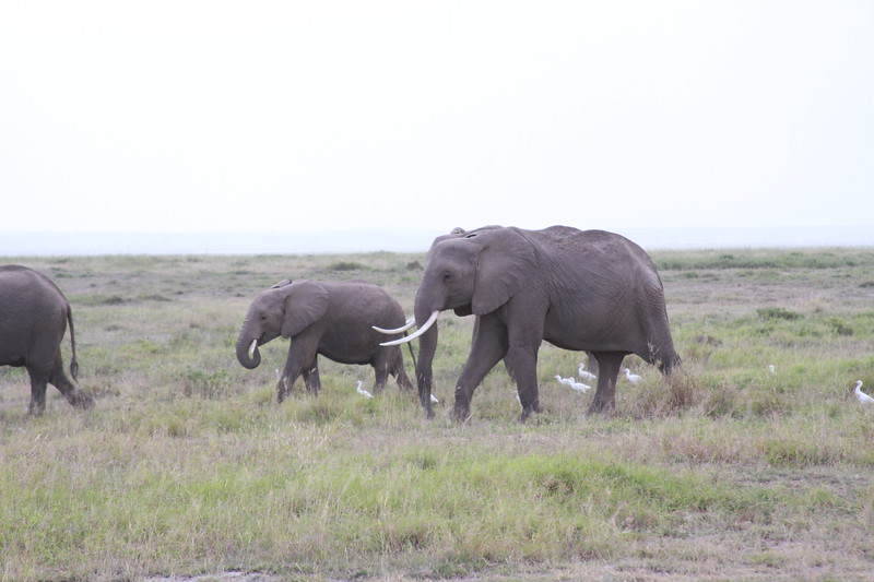Kenya 2019 #2 447.JPG