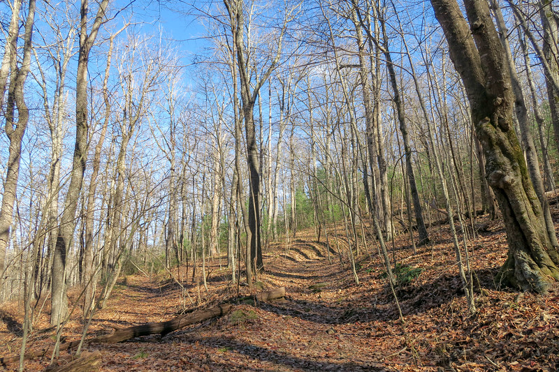 Club Gap Trail -- 3,600'