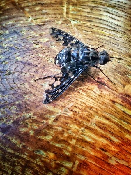 07-fiona-a-bug-flyonwood_5_20141019_2049959871.jpg