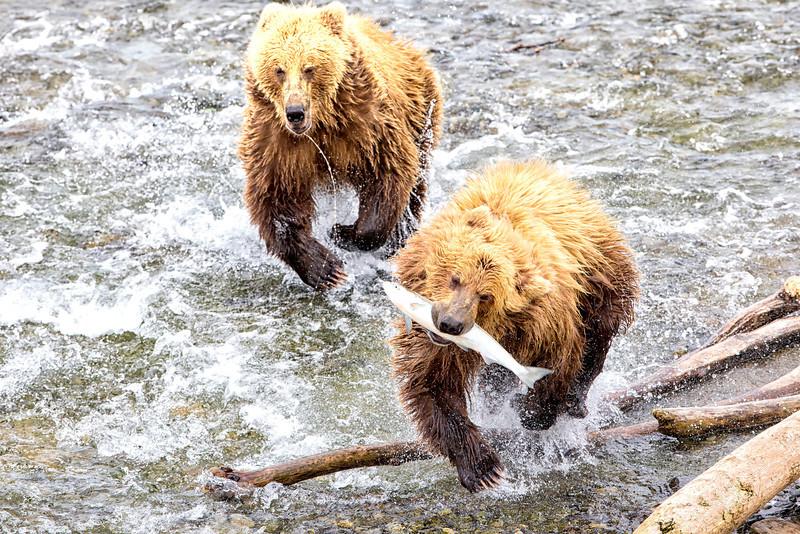 Alaska_2013_FH0T5189.jpg