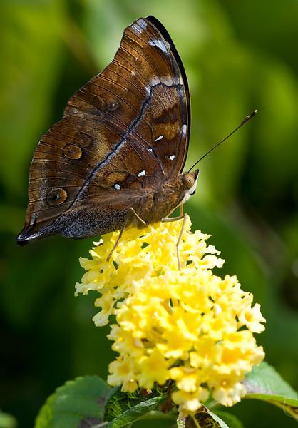 butterfly-7_3800786637_o.jpg