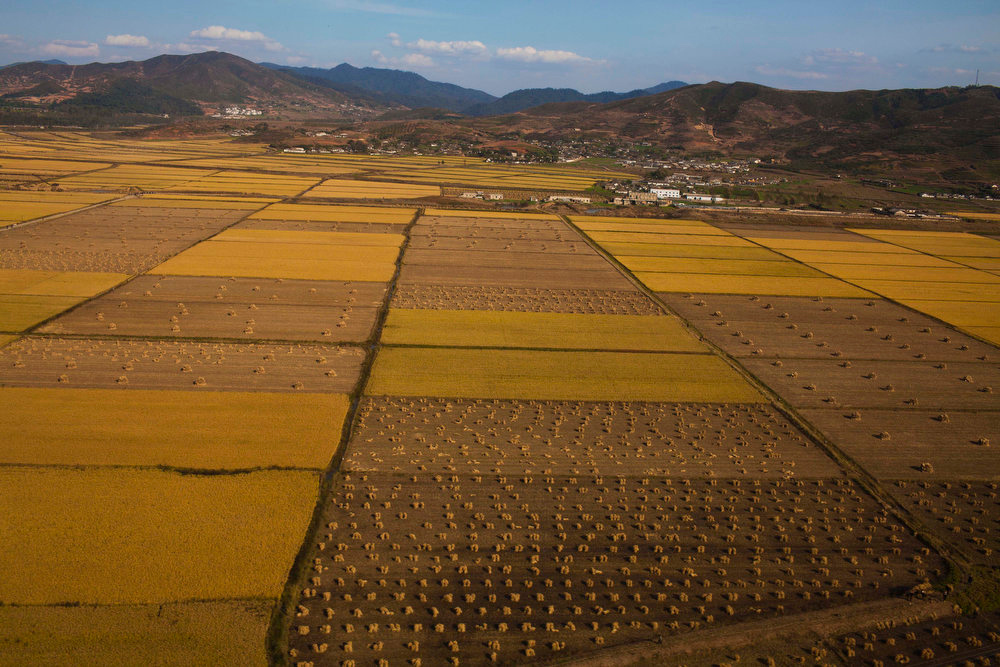 Description of . North Korean farmland on the edge of Pyongyang is seen from the air on Oct. 4, 2011. This autumn, as farmers fan out into fields of corn, wheat, rice and cabbage, such evocative pastoral scenes are a reminder of the challenges North Korea faces in feeding its people.  (AP Photo/David Guttenfelder)