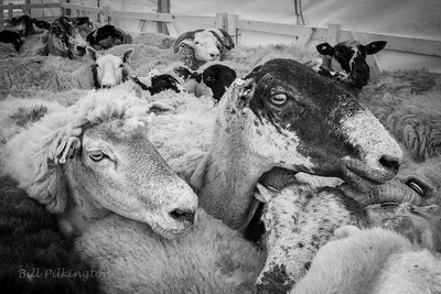 Todmorden Country Fair (black and white)