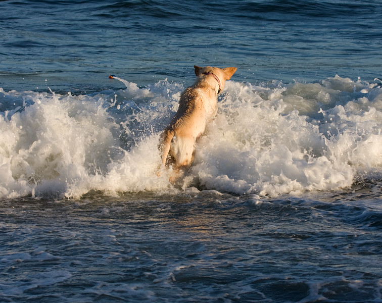 Dog in the waves (1).jpg