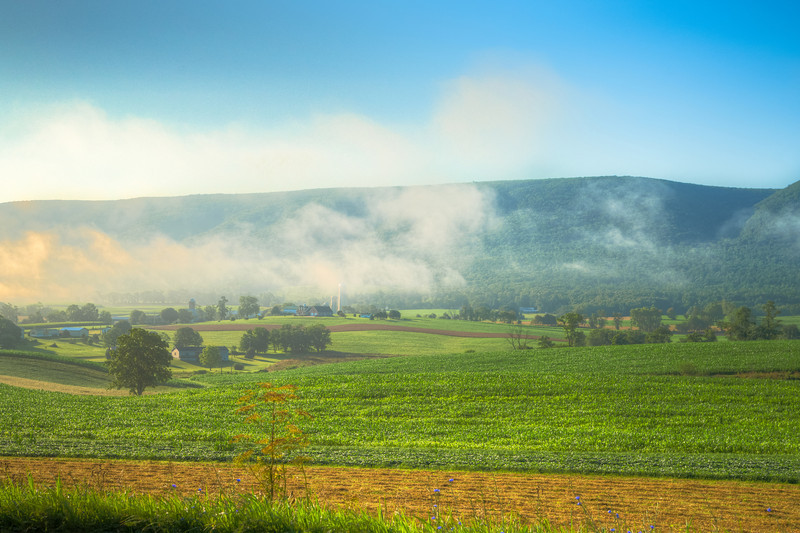 Field near Port Royal in the morning.jpg