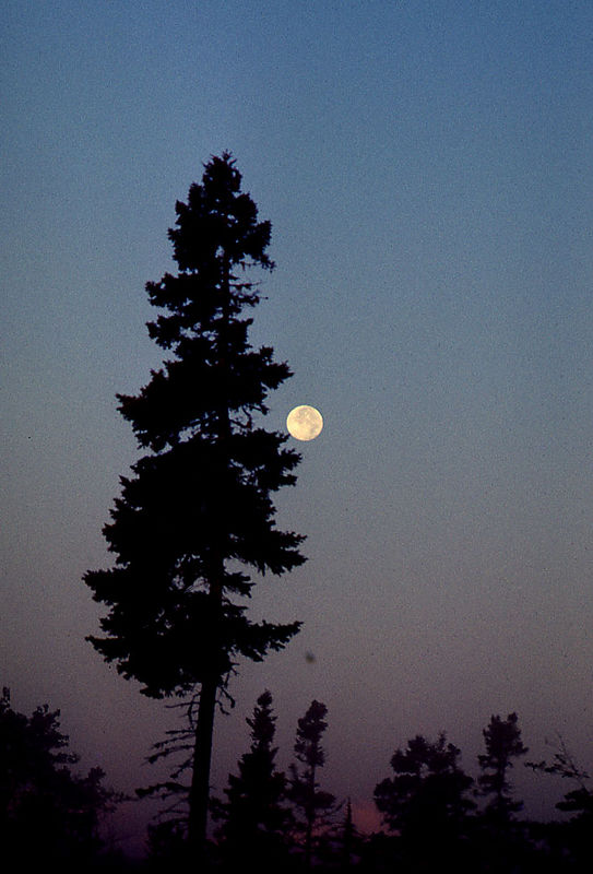 tree moon nova scotia.jpg