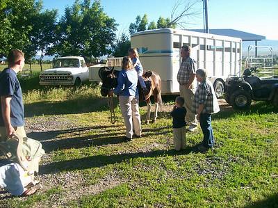 riding ponies Corbridges