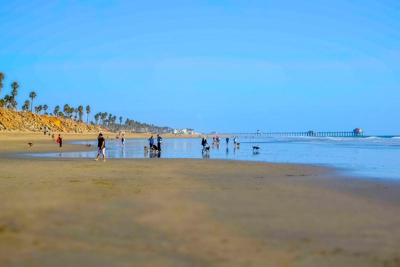 dogs_beach-12.jpg