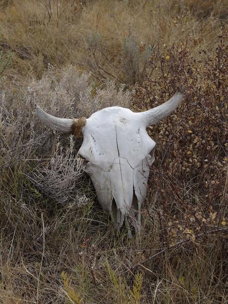 09.28.12_ELFUN Magnificient Moose