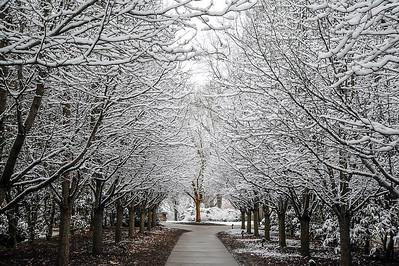 Snowy Trees @Olin