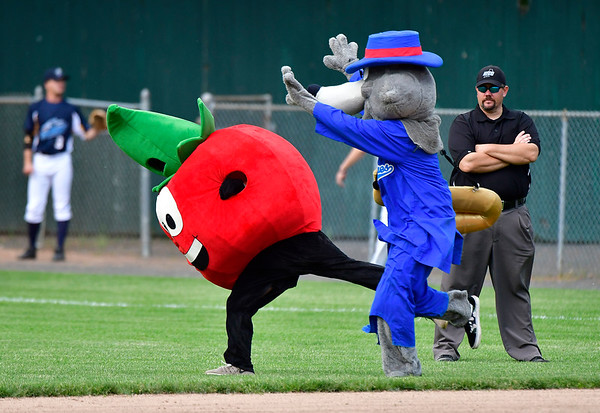 6/1/2019 Mike Orazzi | Staff The Bristol Blues mascot race on Saturday at Muzzy Field.