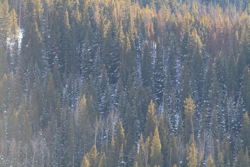 2011 02 11 Keystone CO 012.jpg