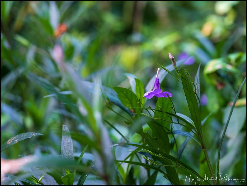 200104 KL Butterfly Park 12.jpg