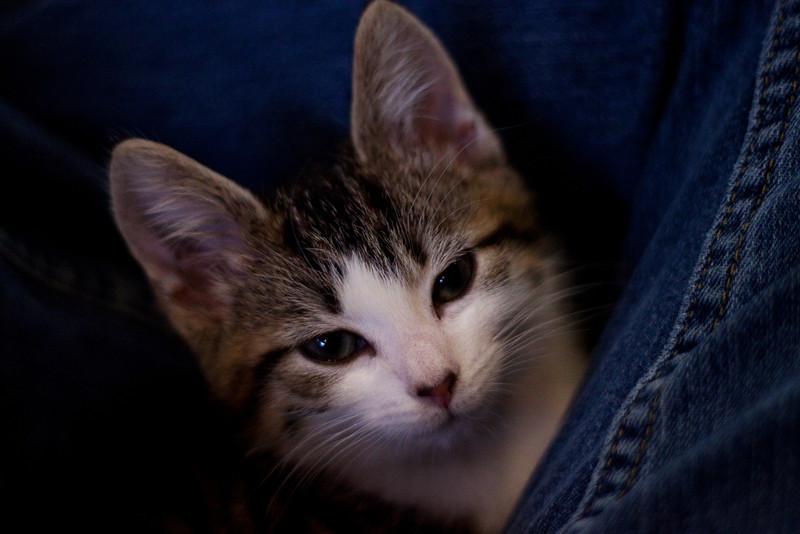 Kittens - Tosca.jpg