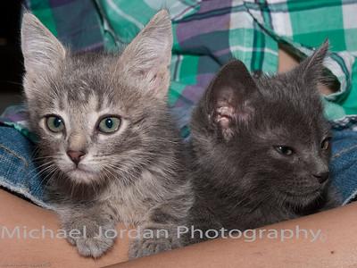 Annettes Kittens