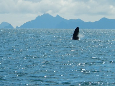 Kenai Fjord cruise - Friday, July 1, Seward AK