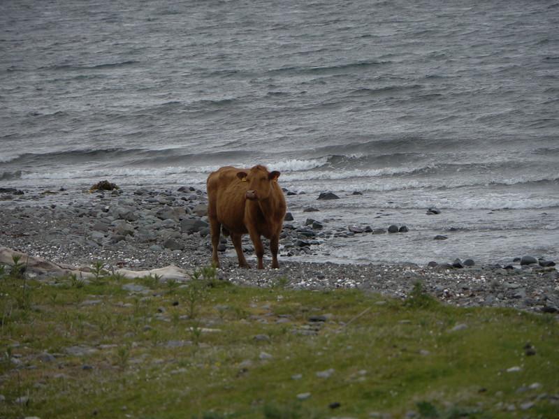 @RobAng Juni 2015 / Knock, Oban South and the Isles Ward, Scotland, GBR, Großbritannien, 7 m ü/M, 2015/06/17 18:10:06