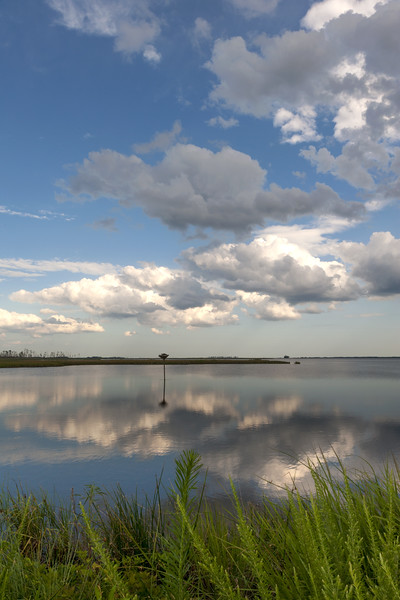 Blackwater Landscape and Osprey Platform