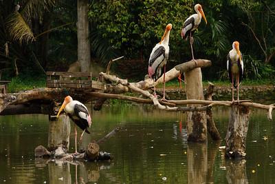 Zoo Negara Outing - 081207