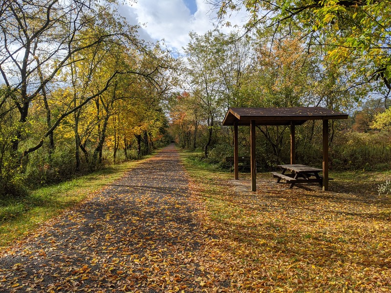 Falling Leaves at Hoodlebug Trail