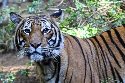 San Diego Zoo - Dec 10, 2011