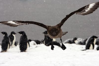 Antarctica - The White Continent