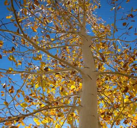 Tahoe Autumn Fire