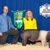 Reserve Champ Swine