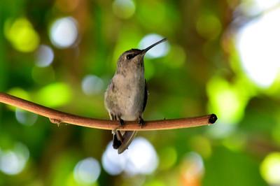 Humming Bird Sept. 2014