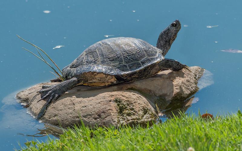 000300 Turtle 16x9.jpg