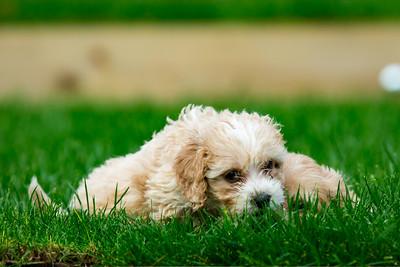 Doggos 021218