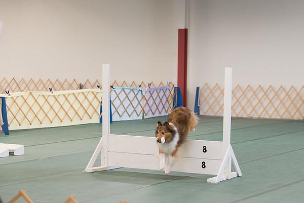 Dog Shows 2015