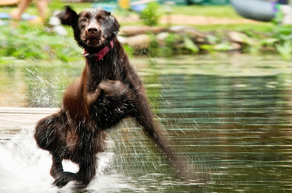 Dock Dogs Practice 2