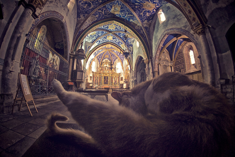 The praying cat...or not.