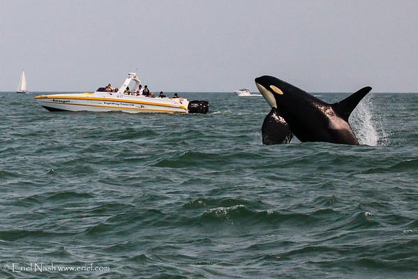 Sidney, Orcas, Port Hardy, BC