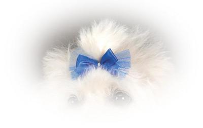DT151 Pampered Pet Dog Bow