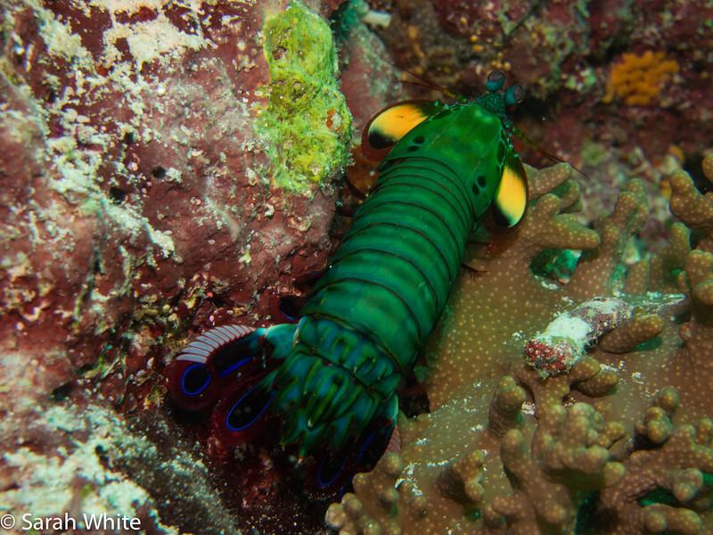 Maldives 2012-626.jpg