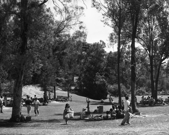 Picnic Area in Use