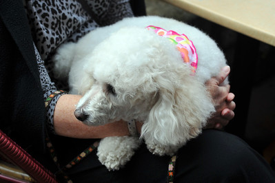 Poodle Day 2012-Party at Beaujolais