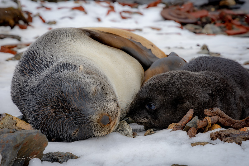 Mom and baby seal.jpg