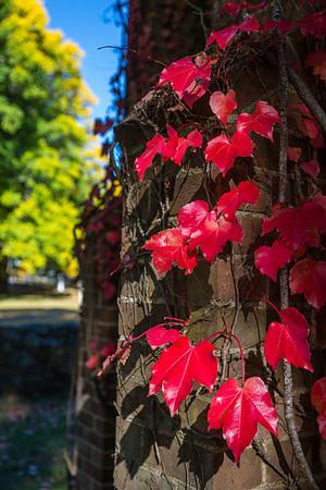 04_Armidale Autumn Colours