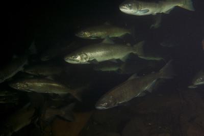 Oregon Dive Pics