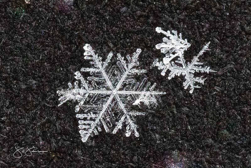 snowflakes-1227.jpg