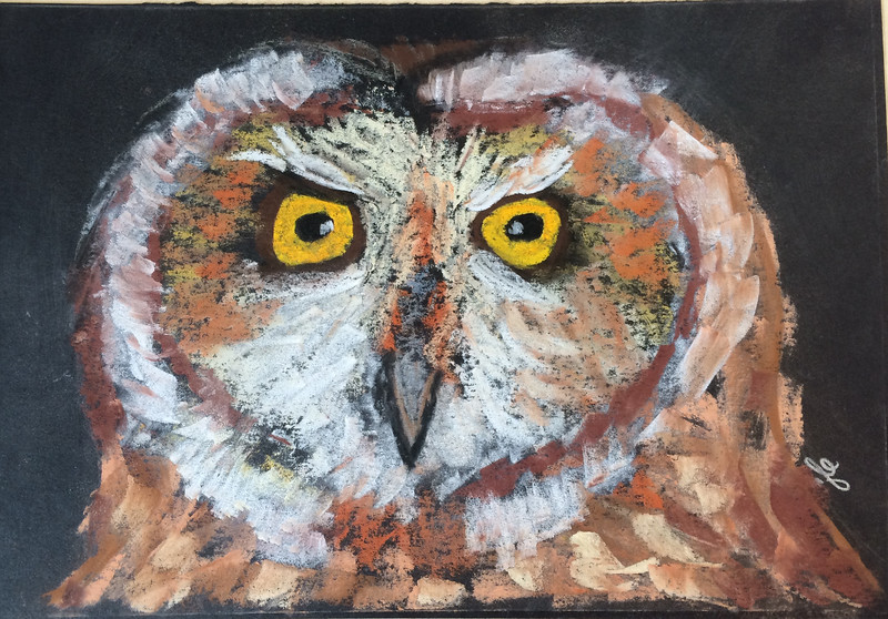 8x10 pastel, short-eared owl, SOLD