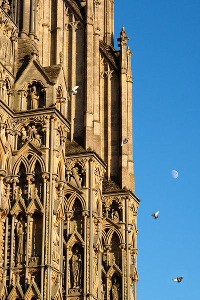 Birds and moon at Wells Cathedral