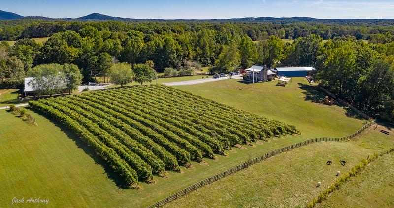 Cavender Creek Vineyards