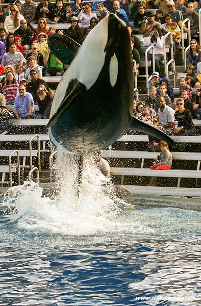 Seaworld-Zoo-14.jpg